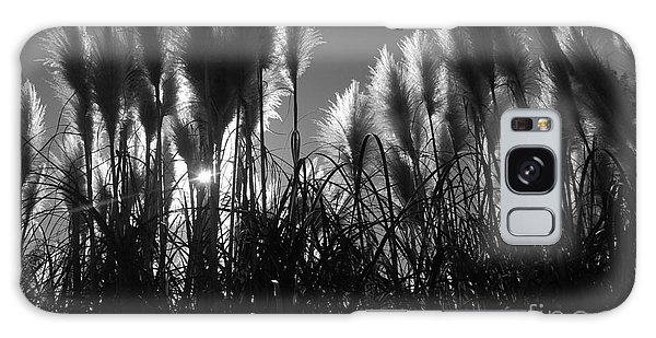 Pampas Grass Tufts In Silhouette  Galaxy Case