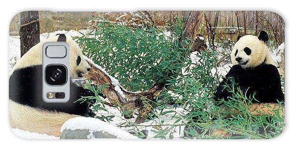 Panda Bears In Snow Galaxy Case by Chris Scroggins