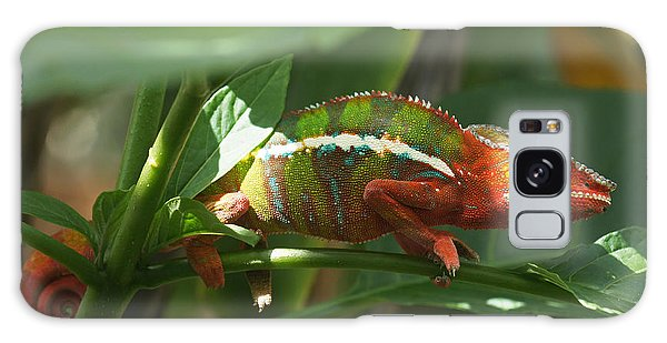Panther Chameleon Madagascar 1 Galaxy Case by Rudi Prott