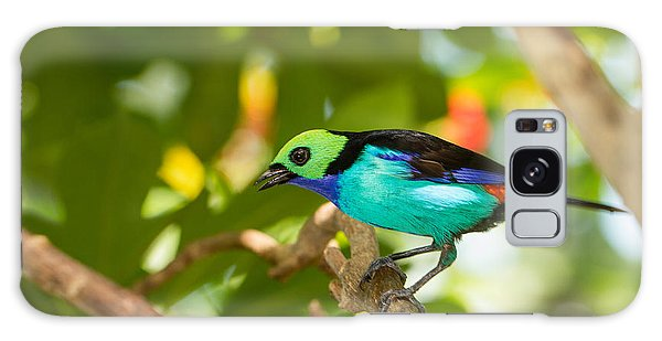 Paradise Tanager Galaxy Case by Doug McPherson