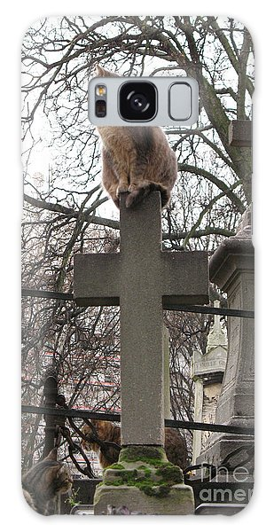 Paris Cemetery Cats - Pere La Chaise Cemetery - Wild Cats On Cross Galaxy Case
