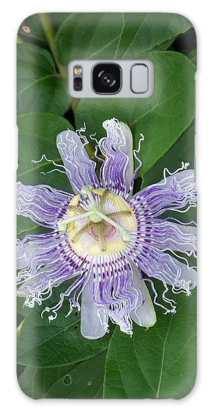 Passion Flower Iv Galaxy Case