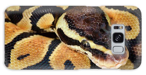 Pastel Royal Python Galaxy S8 Case