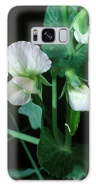 Traits Galaxy Case - Pea Flower by Dr Jeremy Burgess/science Photo Library.