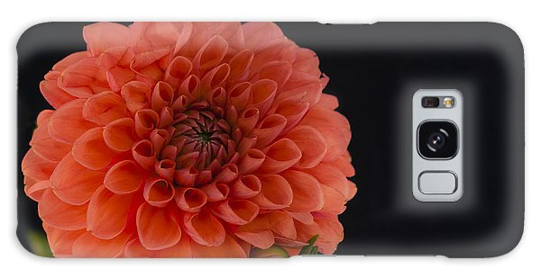 Peach Dahlia Galaxy Case