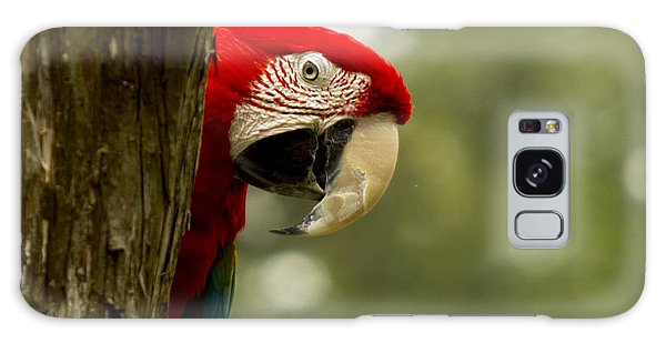 Galaxy Case - Peekaboo Parrot by Frank Savarese