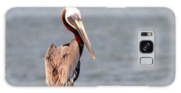 Pelican Eyes The Photographer Galaxy Case