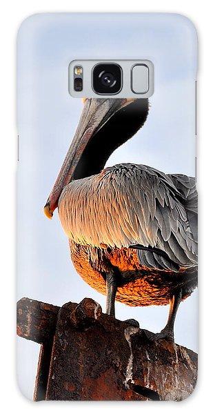 Pelican Looking Back Galaxy Case by AJ  Schibig
