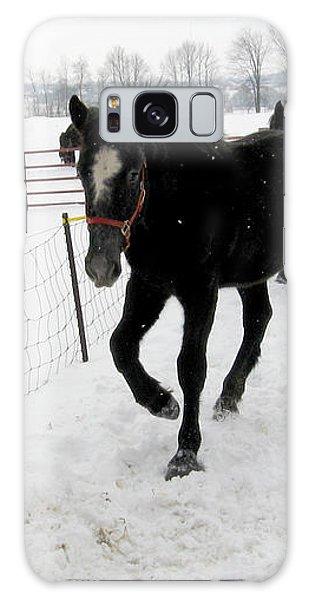 Percheron Horse Colt In Snow Galaxy Case