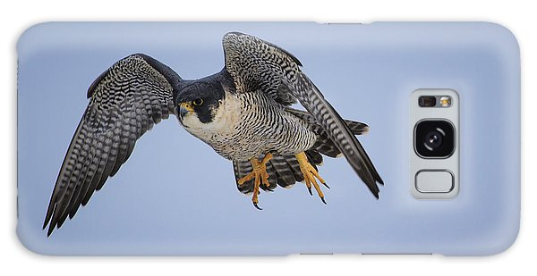 Peregrine Falcon Galaxy Case by Gary Hall