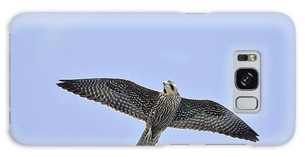 Peregrine Falcon In Flight Galaxy Case