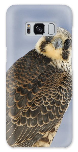 Peregrine Falcon Looking At You Galaxy Case