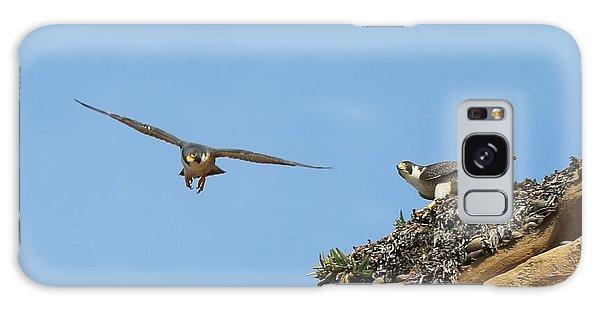 Peregrine Falcons - 1 Galaxy Case