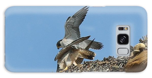 Peregrine Falcons - 4 Galaxy Case