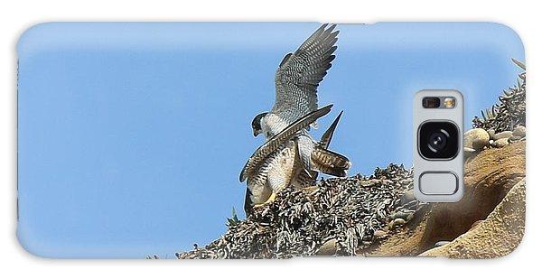 Peregrine Falcons - 5 Galaxy Case