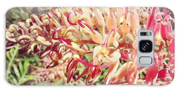 Decorative Galaxy Case - Australian Grevillea Flower by Sinead Connell