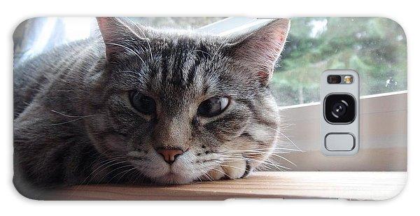 Pet Portrait - Lily The Cat Galaxy Case