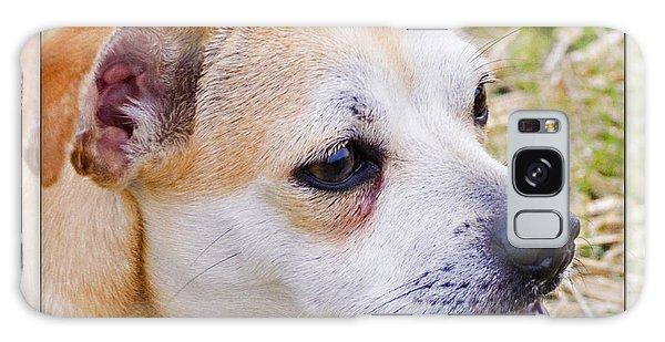 Pets Galaxy Case