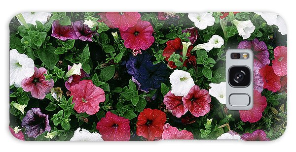 Hybrid Galaxy Case - Petunia F2 Hybrids Mixed by Maurice Nimmo/science Photo Library