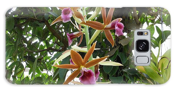 Phaius Orchids Galaxy Case