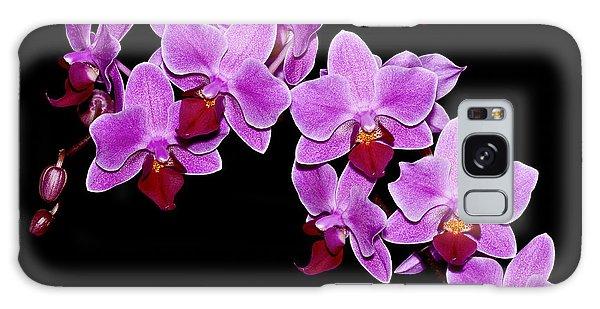 Phalaenopsis Galaxy Case