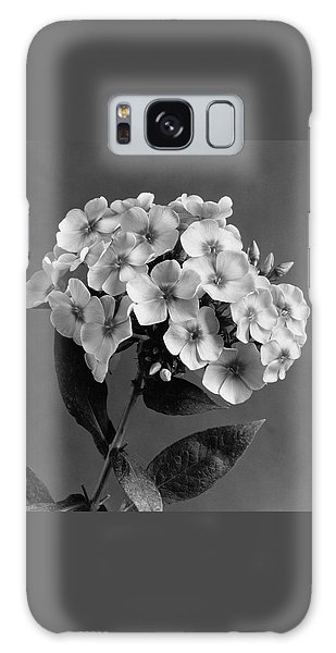 Phlox Blossoms Galaxy Case