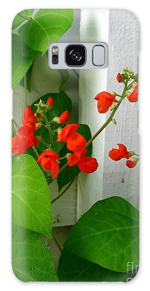 Picket Fence Runner Beans Galaxy Case