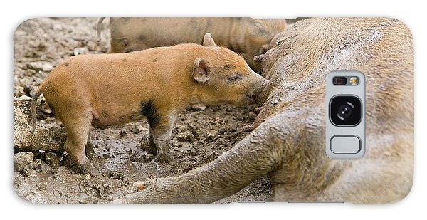 Pigs Reared For Pork On Tuvalu Galaxy Case