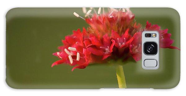 Hybrid Galaxy Case - Pincushion Flower (scabiosa Caucasica) by Maria Mosolova/science Photo Library