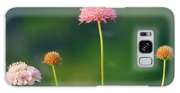 Hybrid Galaxy Case - Pincushion Flowers (scabiosa Caucasica) by Maria Mosolova/science Photo Library