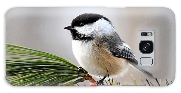 Galaxy Case featuring the photograph Pine Chickadee by Christina Rollo