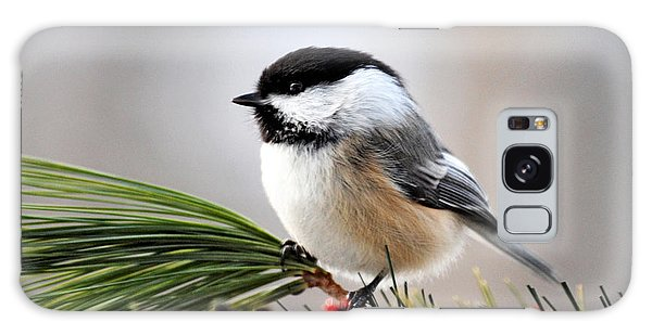 Pine Chickadee Galaxy Case by Christina Rollo