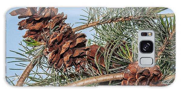 Pine Cones Galaxy Case by Len Romanick