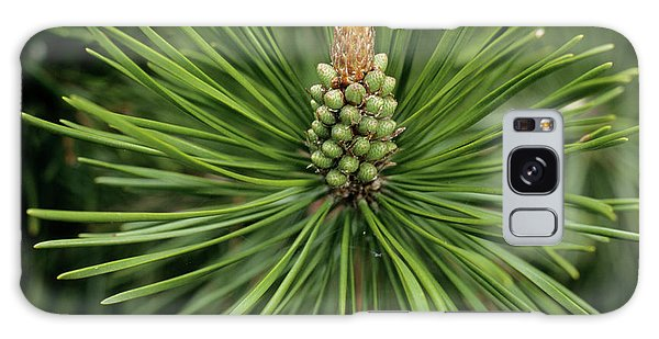 Cairngorms National Park Galaxy Case - Pine Tree Flower by Duncan Shaw/science Photo Library