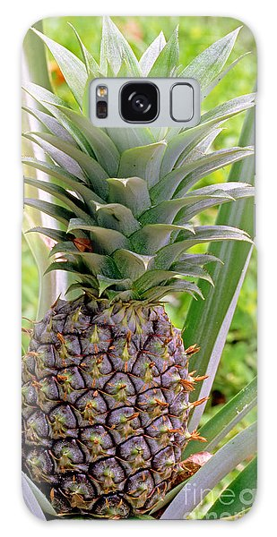 Pineapple Plant Galaxy Case by Millard H. Sharp