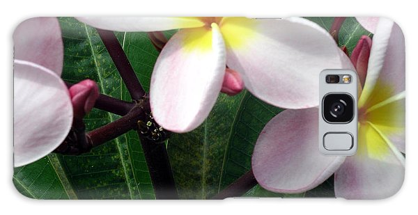 Pink And Yellow Plumeria Galaxy Case by Karen Nicholson