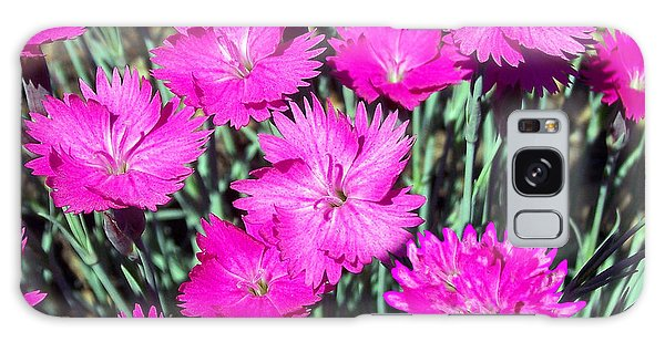 Pink Daisies Galaxy Case