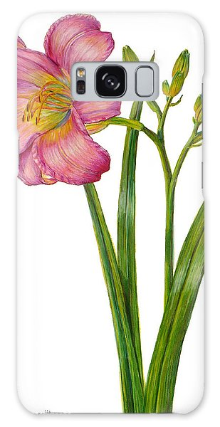 Pink Daylily - Hemerocallis Galaxy Case