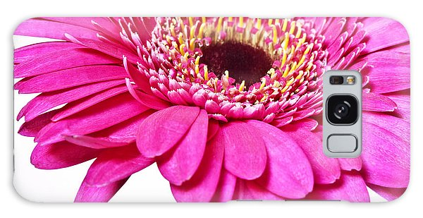Pink Gerber Daisy Flower Galaxy Case