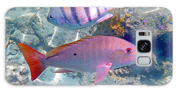 Mangrove Snapper Galaxy Case - Pink Mutton by Carey Chen
