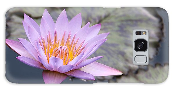 Pink Water Lily At Dusk Galaxy Case by Yvonne Wright