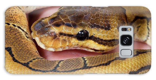 Boa Constrictor Galaxy Case - Pinstripe Royal Python by Nigel Downer