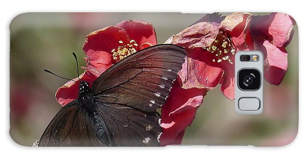 Pipevine Swallowtail And Roses Galaxy Case