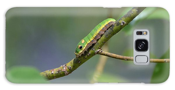 Pipevine Swallowtail Caterpillar Galaxy Case