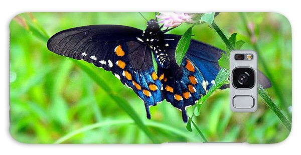 Pipevine Swallowtail Hanging On Galaxy Case