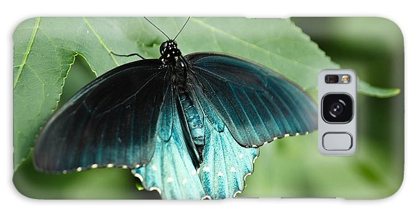 Pipevine Swallowtail Galaxy Case