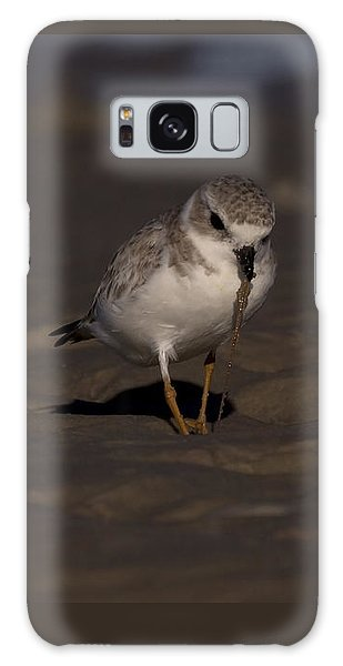 Piping Plover Photo Galaxy Case by Meg Rousher