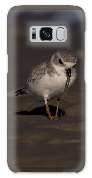 Piping Plover Photo Galaxy Case