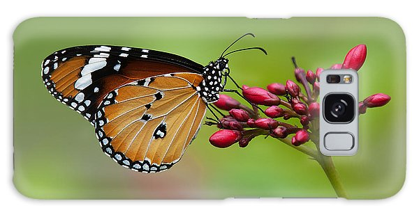 Plain Tiger Or African Monarch Butterfly Dthn0008 Galaxy Case