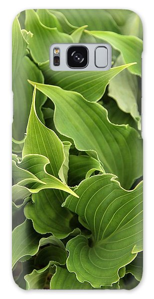Sea Lily Galaxy Case - Plantain Lily (hosta 'restless Sea') by Adrian Thomas/science Photo Library